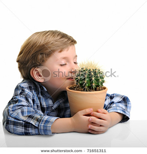 Little boy hugs a small potted cactus.